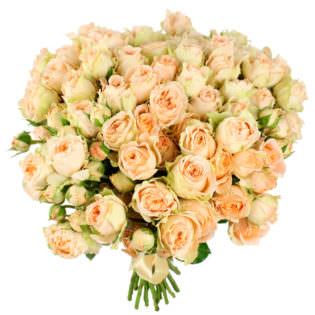 Розы Пионовидные бежевые