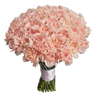 Гвоздика светло розовая